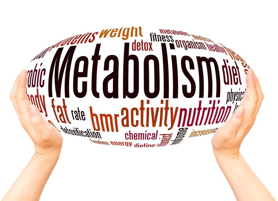 parole come metabolismo e attività